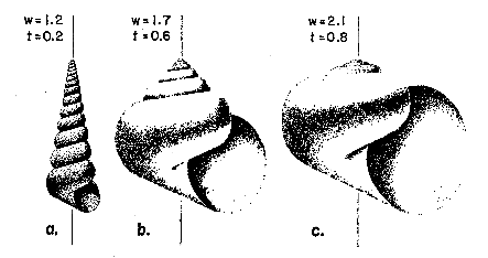 Computer as Aid in Describing Form in Gastropod Shells
